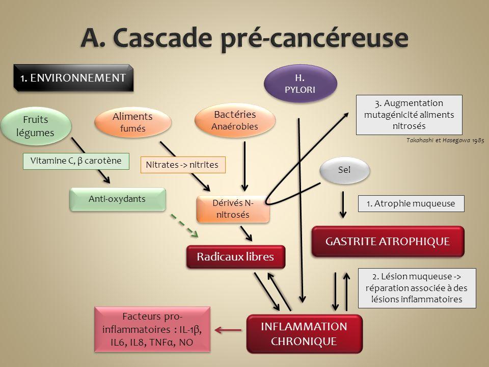 A. Cascade pré-cancéreuse