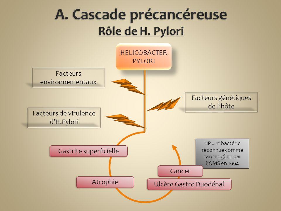 A. Cascade précancéreuse Rôle de H. Pylori