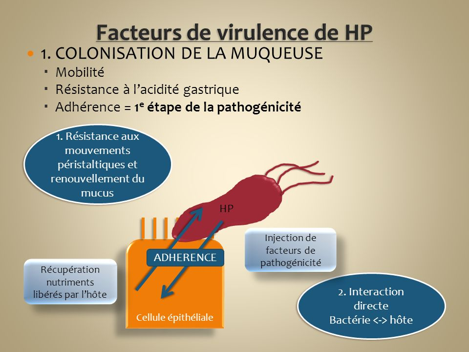 Facteurs de virulence de HP