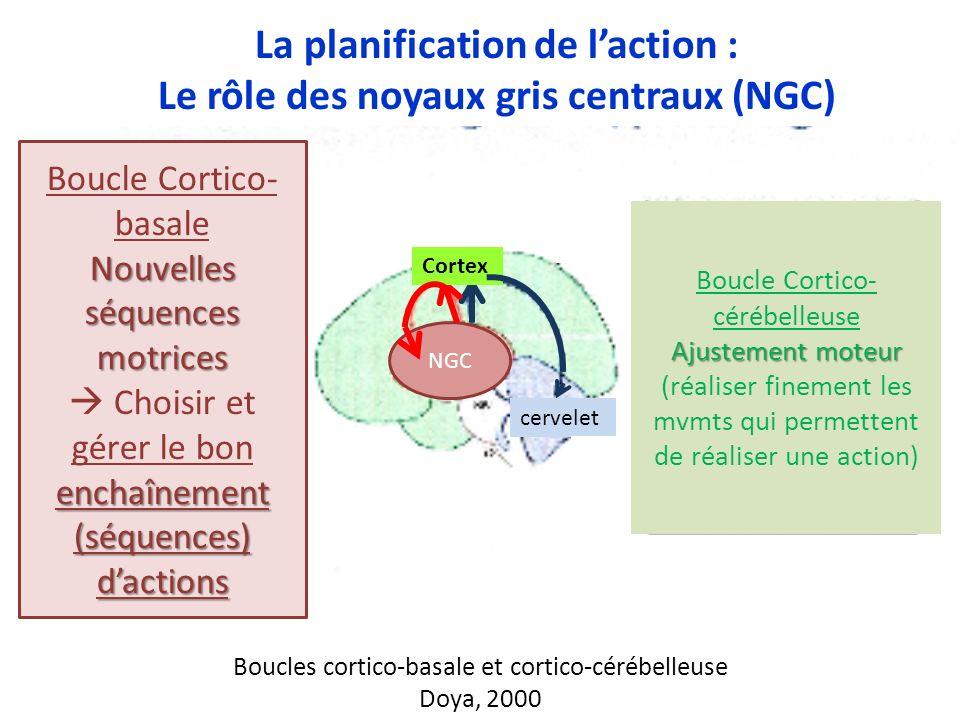 La planification de l'action : Le rôle des noyaux gris centraux (NGC)