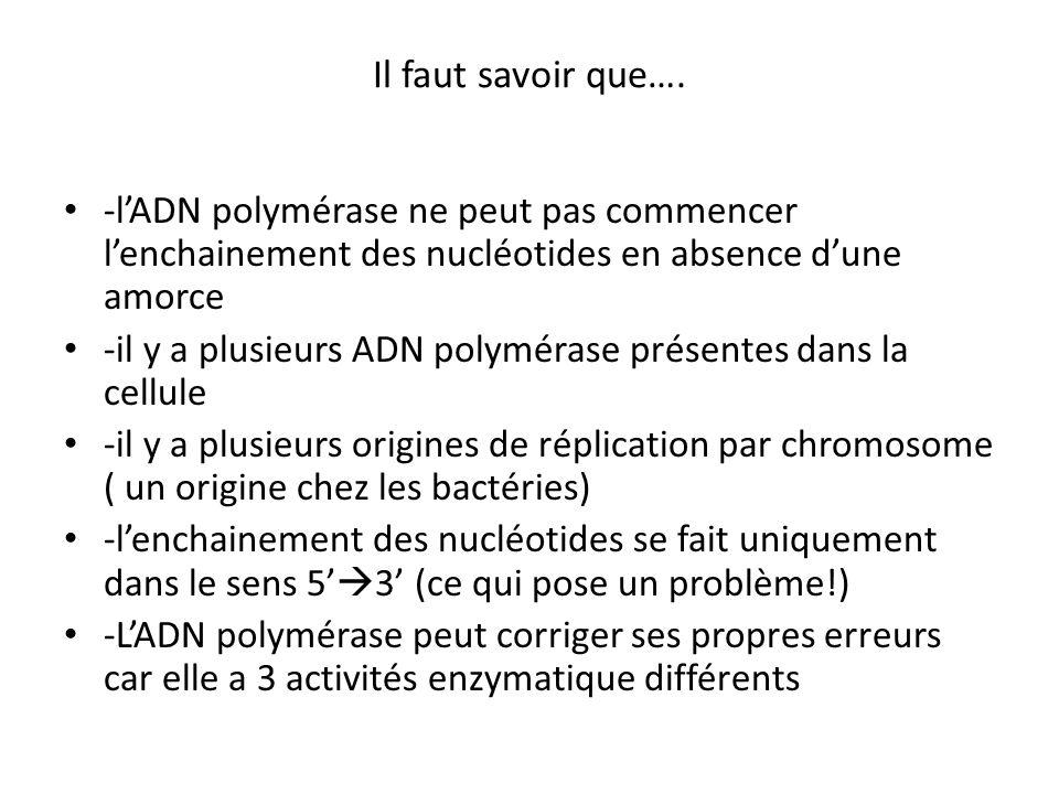 Il faut savoir que…. -l'ADN polymérase ne peut pas commencer l'enchainement des nucléotides en absence d'une amorce.