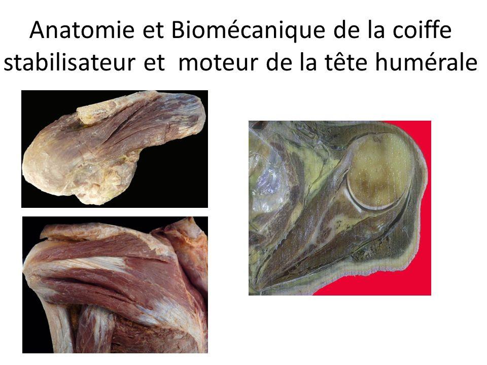 Anatomie et Biomécanique de la coiffe stabilisateur et moteur de la tête humérale