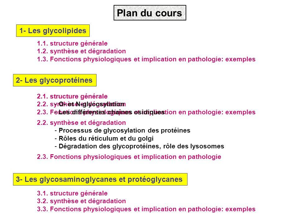 Plan du cours 1- Les glycolipides 2- Les glycoprotéines