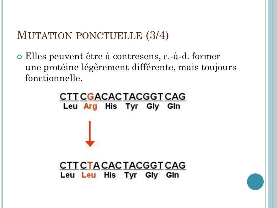 Mutation ponctuelle (3/4)