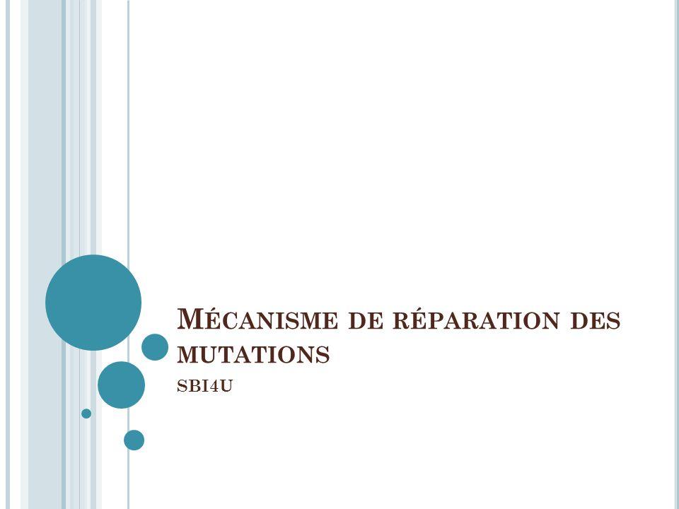 Mécanisme de réparation des mutations