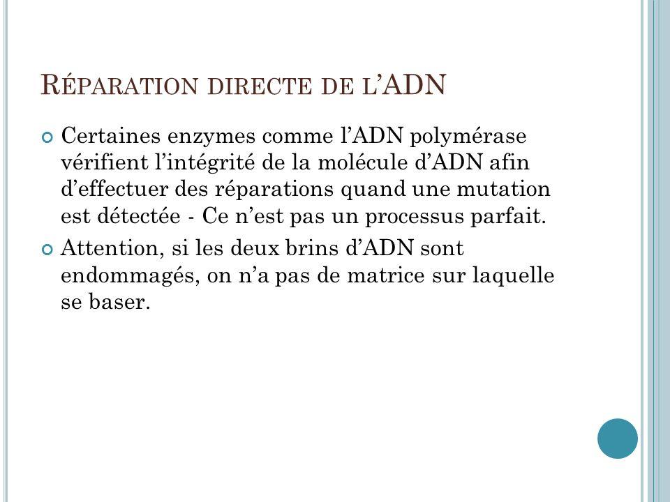 Réparation directe de l'ADN