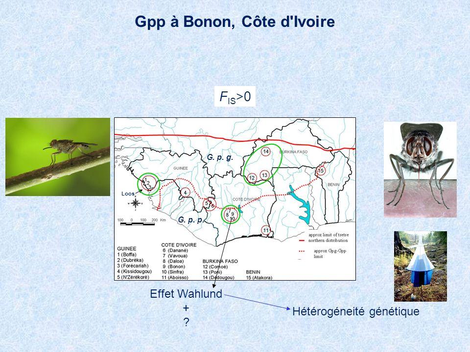 Gpp à Bonon, Côte d Ivoire