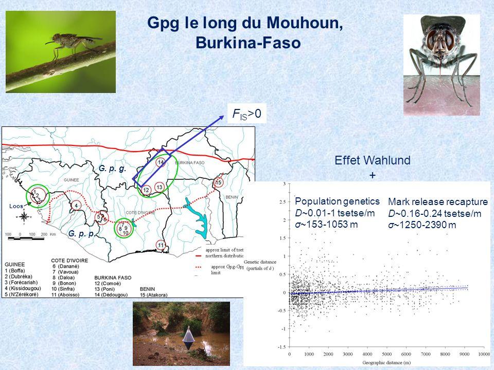Gpg le long du Mouhoun, Burkina-Faso