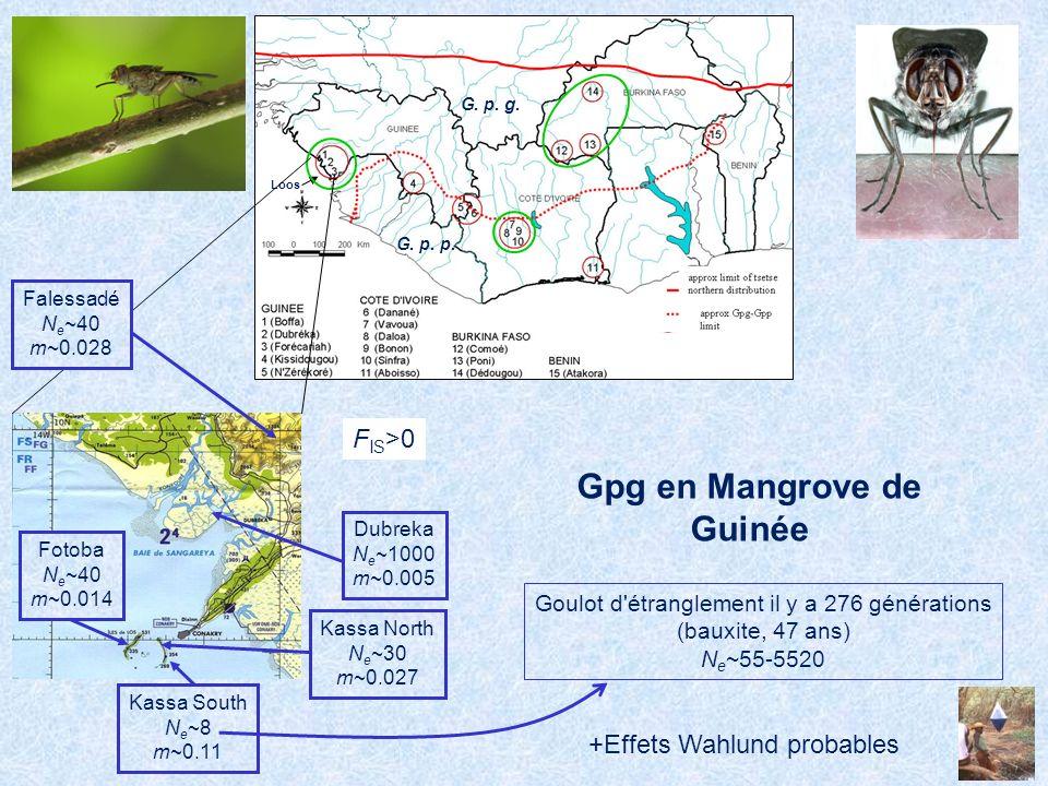 Gpg en Mangrove de Guinée