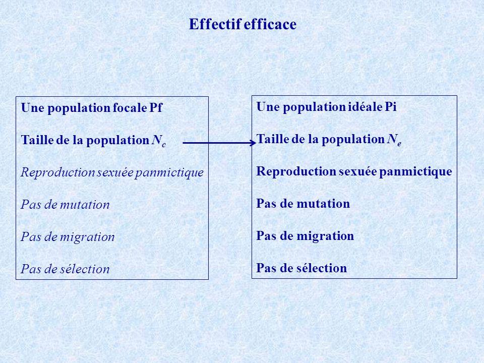 Effectif efficace Une population focale Pf Une population idéale Pi