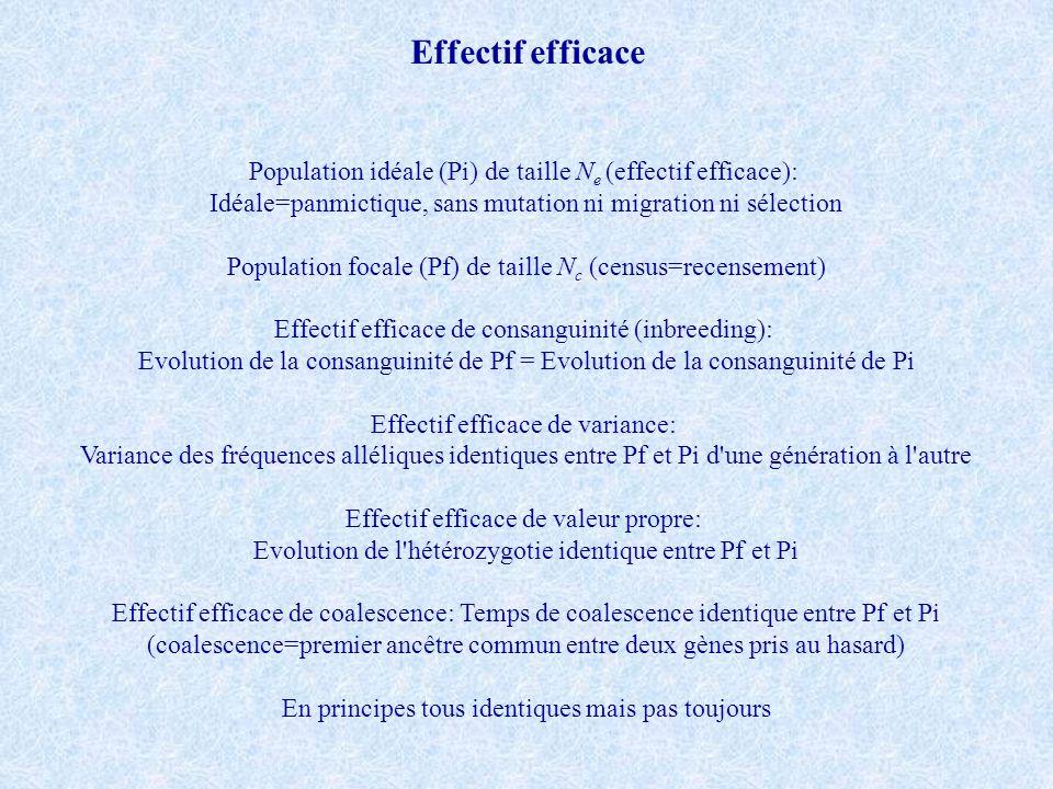 Effectif efficace Population idéale (Pi) de taille Ne (effectif efficace): Idéale=panmictique, sans mutation ni migration ni sélection.
