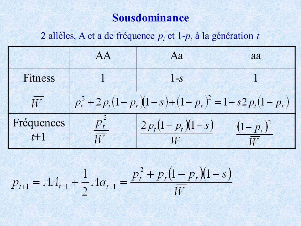 2 allèles, A et a de fréquence pt et 1-pt à la génération t