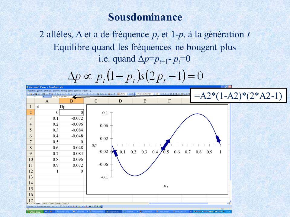 Sousdominance 2 allèles, A et a de fréquence pt et 1-pt à la génération t. Equilibre quand les fréquences ne bougent plus.