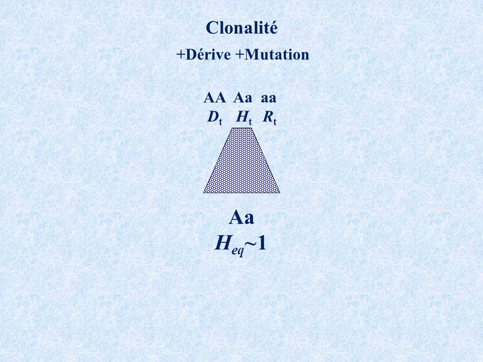 Clonalité +Dérive +Mutation AA Aa aa Dt Ht Rt Aa Heq~1