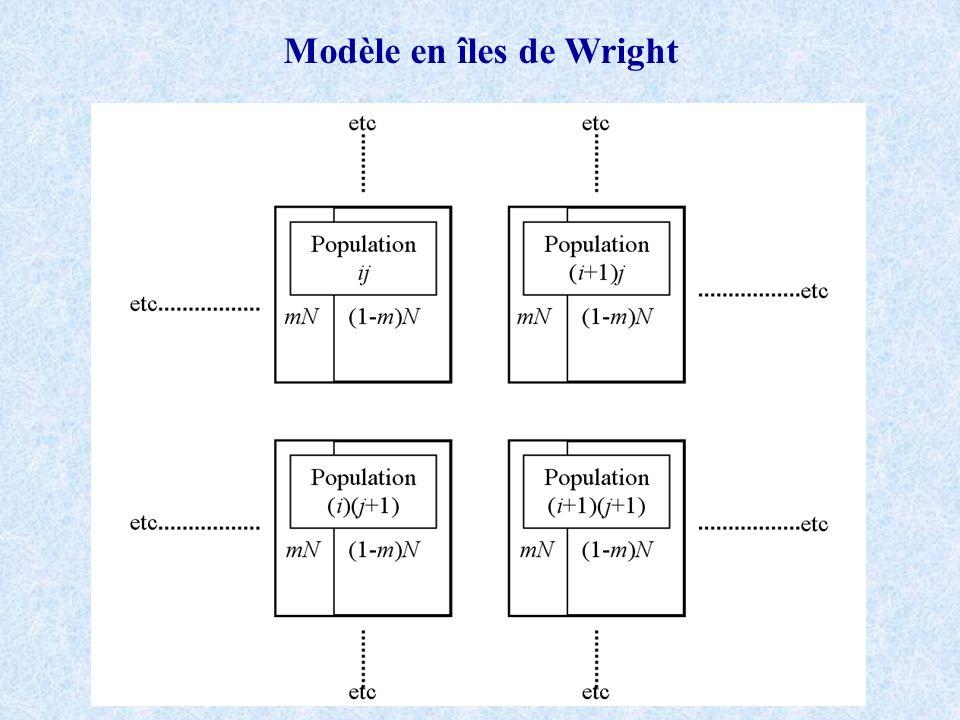 Modèle en îles de Wright