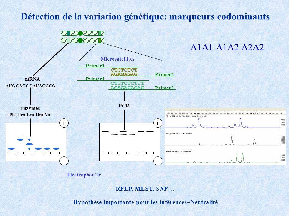 Détection de la variation génétique: marqueurs codominants