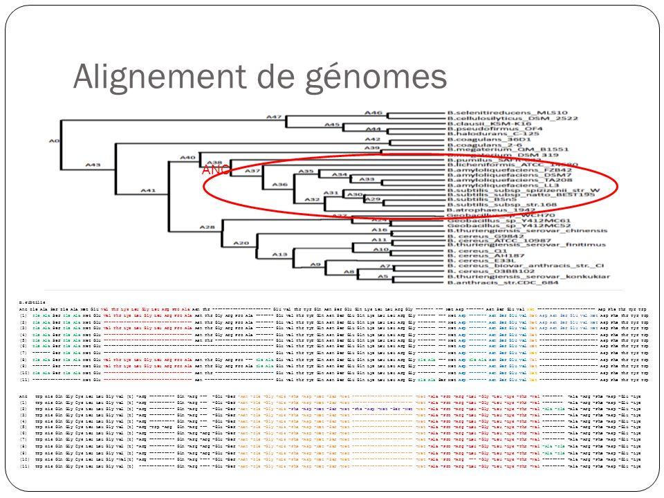 Alignement de génomes ANC B.subtilis