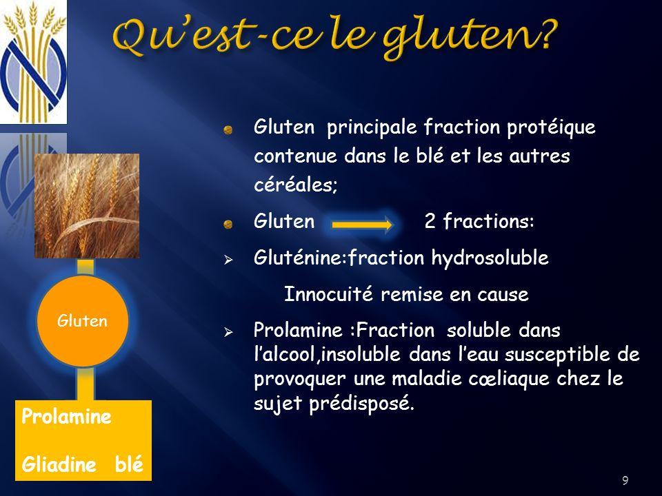 Qu'est-ce le gluten Gluten principale fraction protéique contenue dans le blé et les autres céréales;