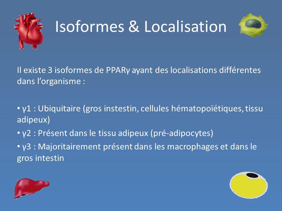 Isoformes & Localisation