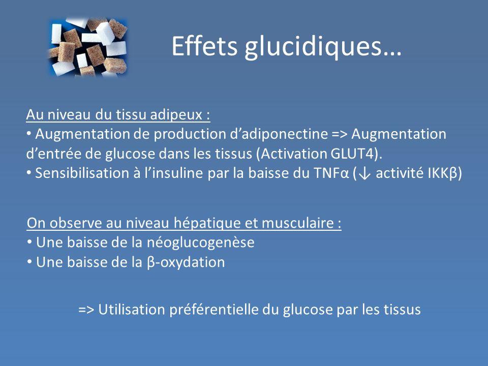 Effets glucidiques… Au niveau du tissu adipeux :