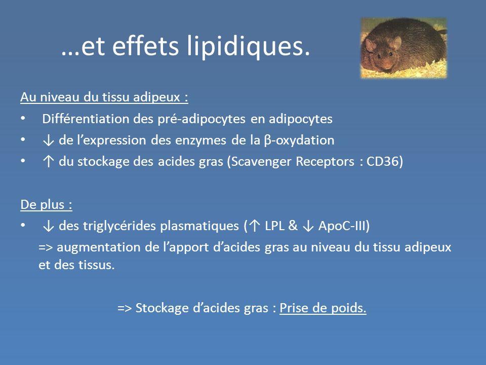 …et effets lipidiques. Au niveau du tissu adipeux :