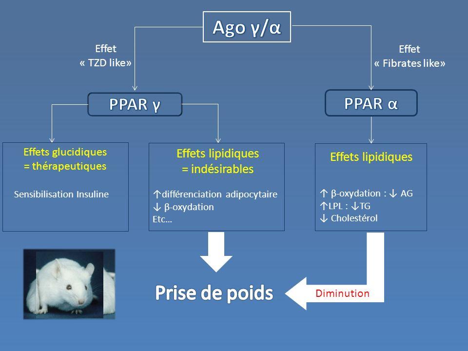 Ago γ/α Prise de poids PPAR γ PPAR α Effets lipidiques