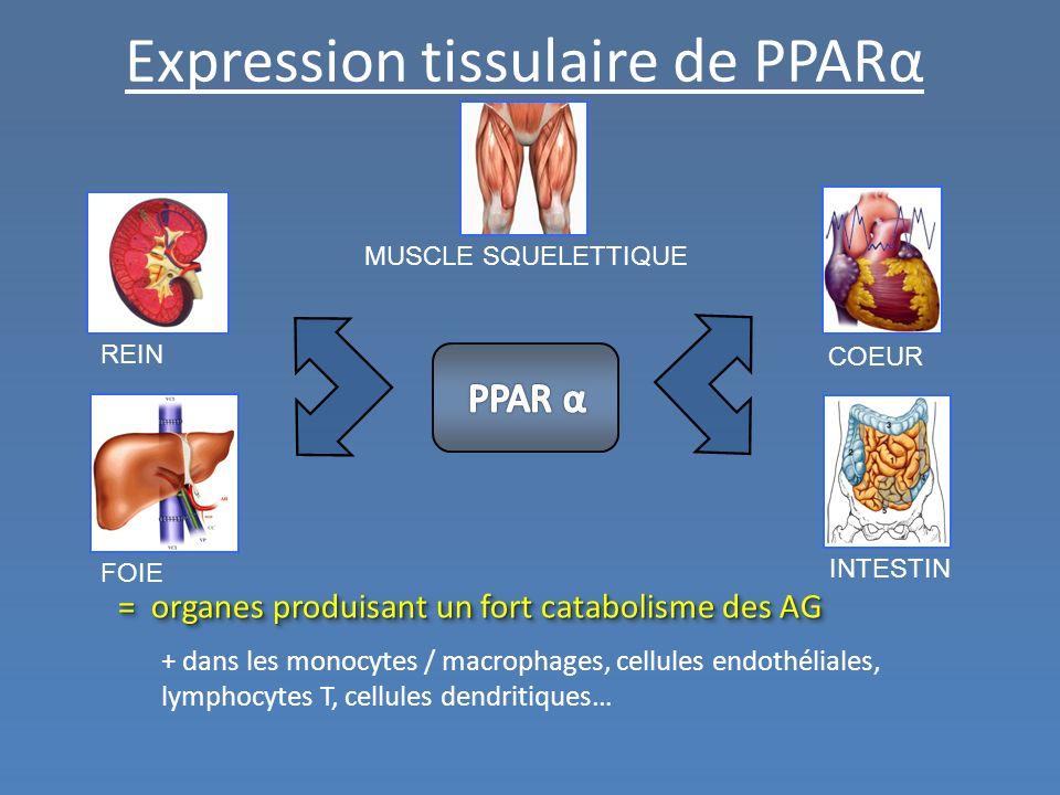 Expression tissulaire de PPARα