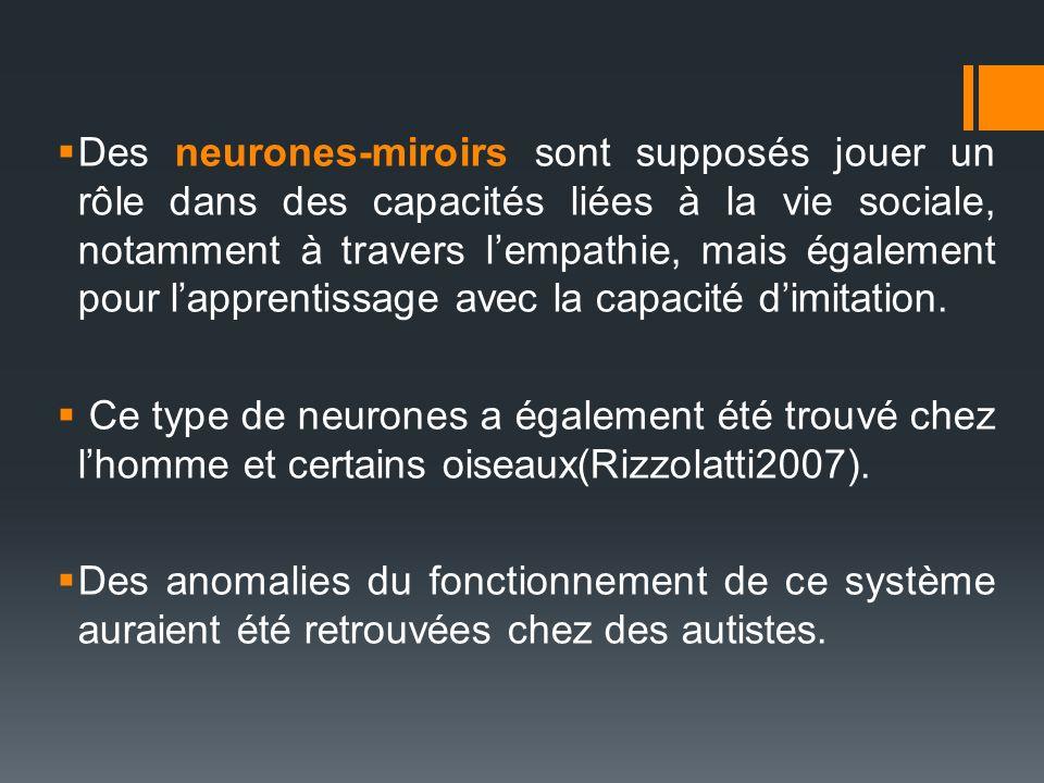 Des neurones-miroirs sont supposés jouer un rôle dans des capacités liées à la vie sociale, notamment à travers l'empathie, mais également pour l'apprentissage avec la capacité d'imitation.