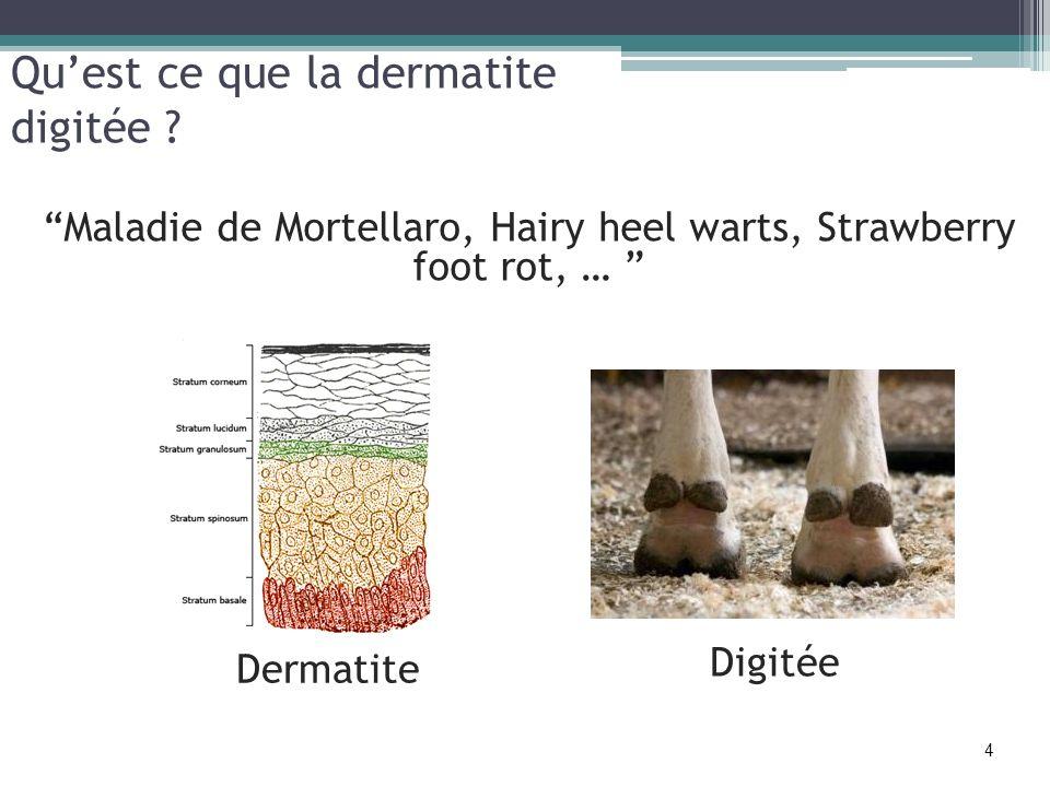 Qu'est ce que la dermatite digitée
