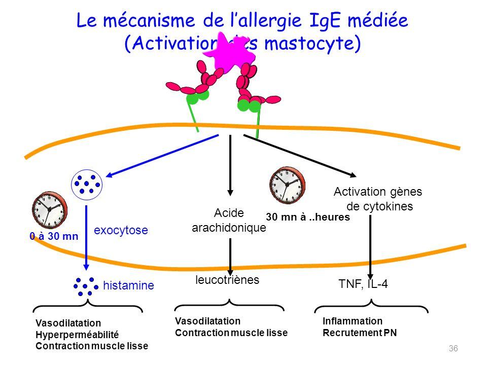 Le mécanisme de l'allergie IgE médiée (Activation des mastocyte)