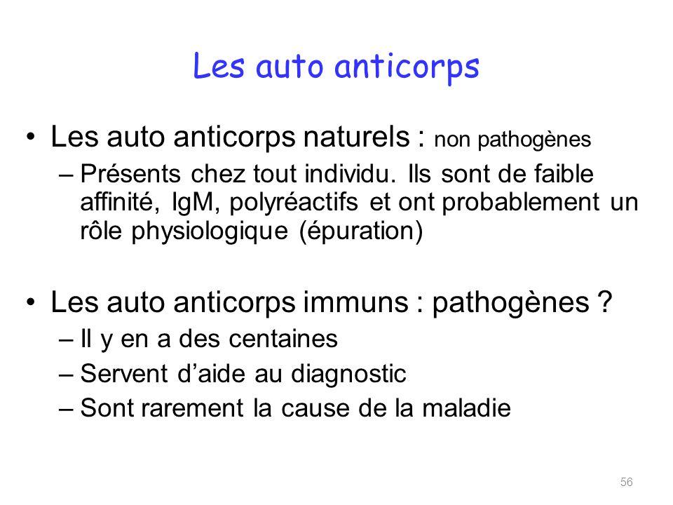 Les auto anticorps Les auto anticorps naturels : non pathogènes