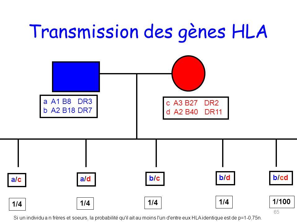 Transmission des gènes HLA