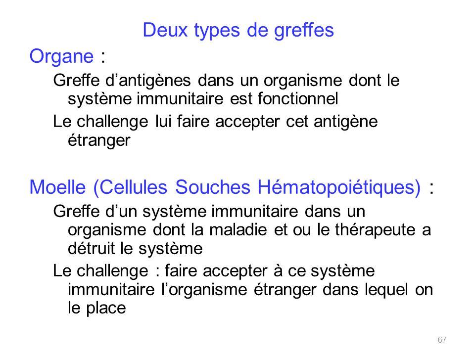 Moelle (Cellules Souches Hématopoiétiques) :