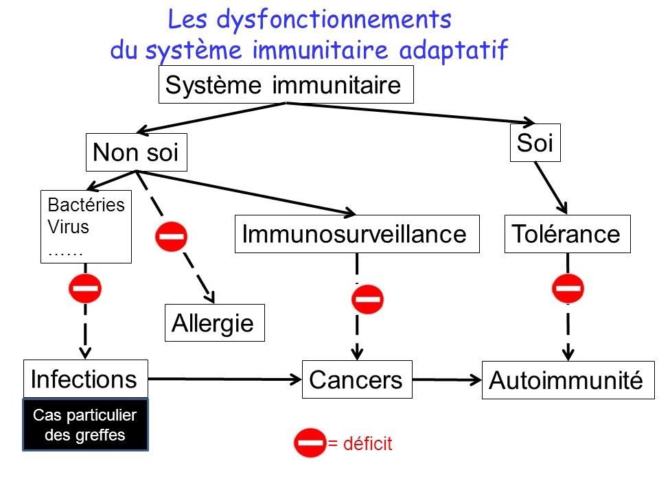 Les dysfonctionnements du système immunitaire adaptatif