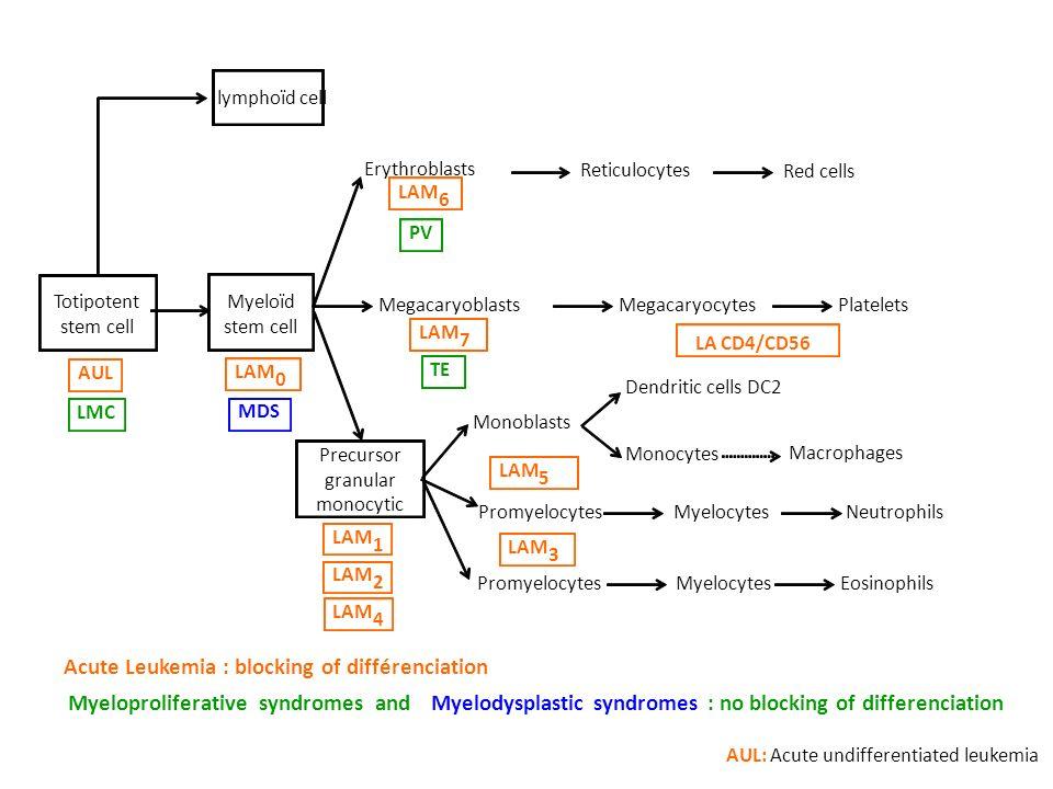 Acute Leukemia : blocking of différenciation