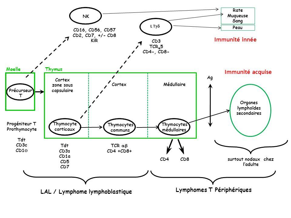 Immunité innée Immunité acquise Lymphomes T Périphériques