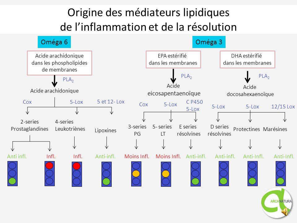 Origine des médiateurs lipidiques de l'inflammation et de la résolution