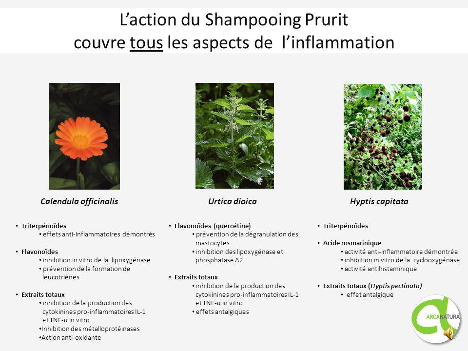 L'action du Shampooing Prurit couvre tous les aspects de l'inflammation