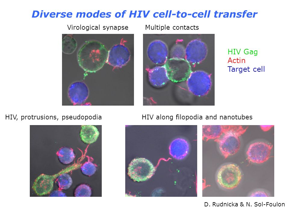 Diverse modes of HIV cell-to-cell transfer