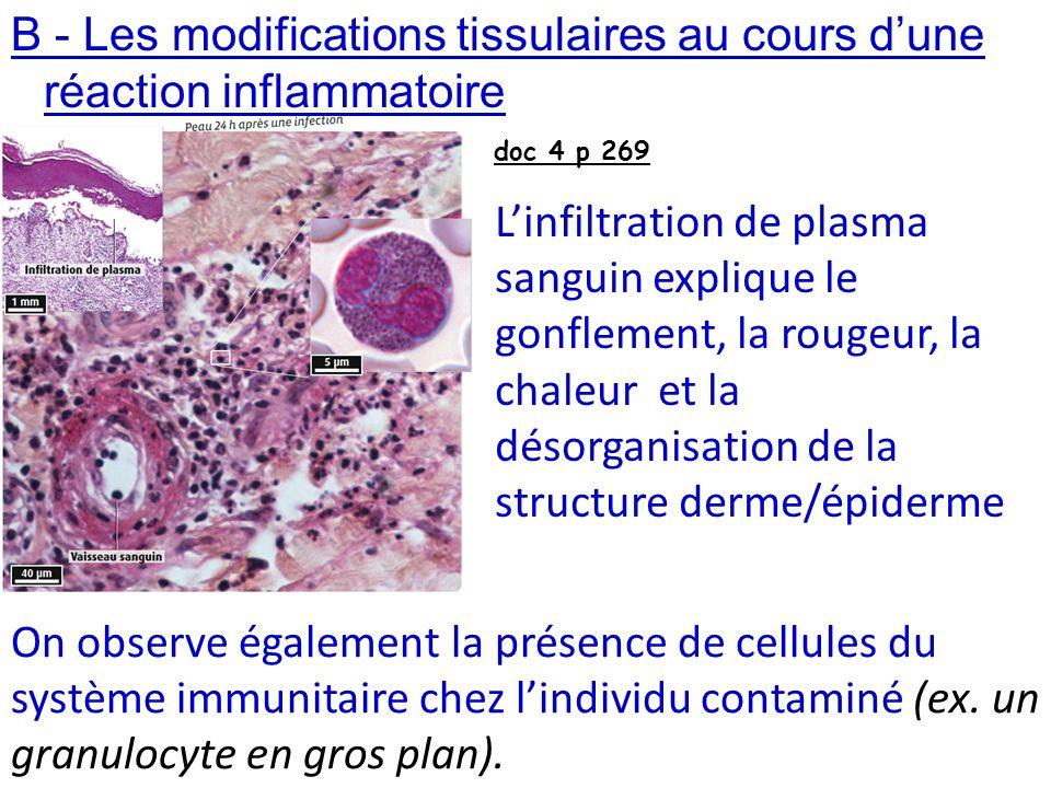 B - Les modifications tissulaires au cours d'une réaction inflammatoire