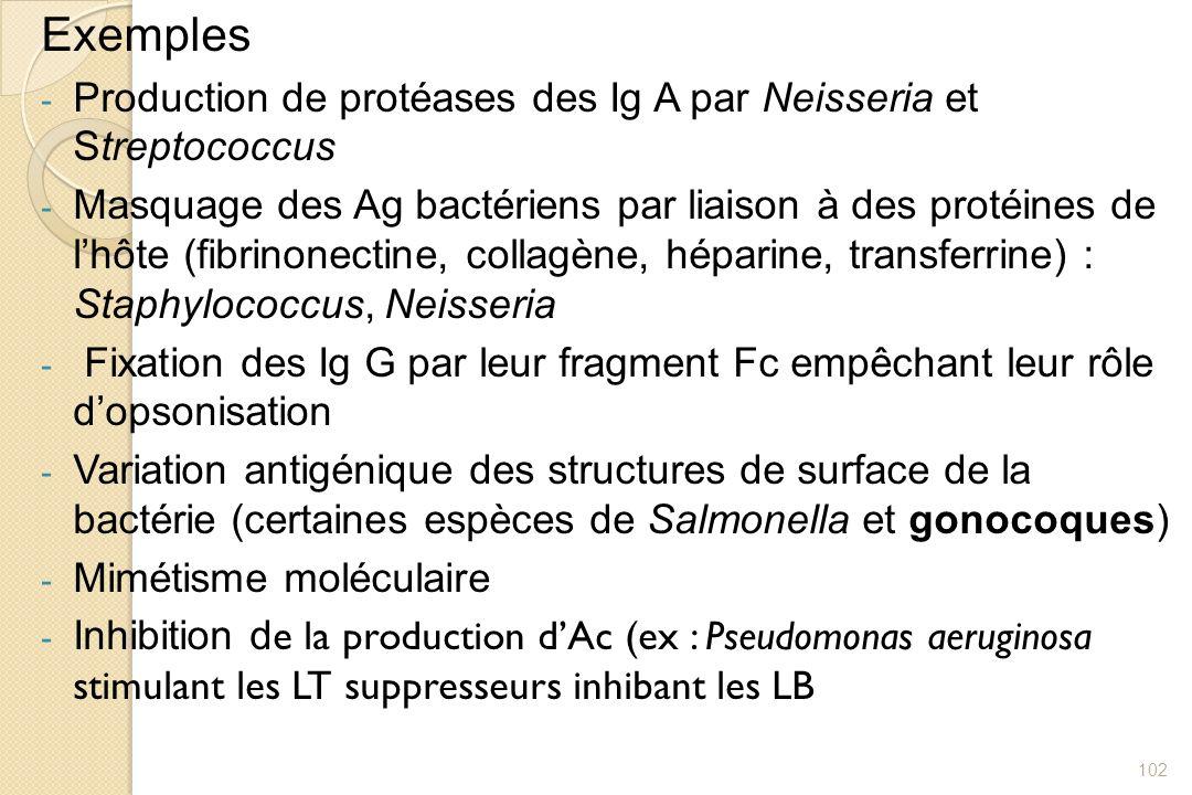 Exemples Production de protéases des Ig A par Neisseria et Streptococcus.