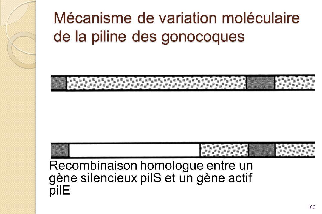 Mécanisme de variation moléculaire de la piline des gonocoques