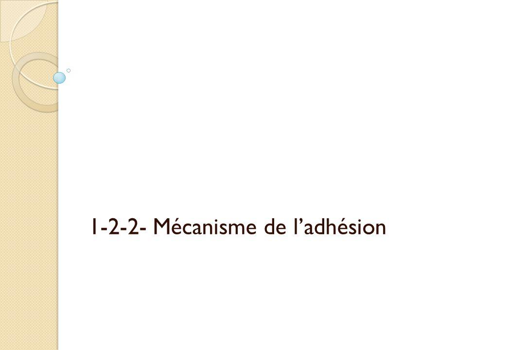 1-2-2- Mécanisme de l'adhésion