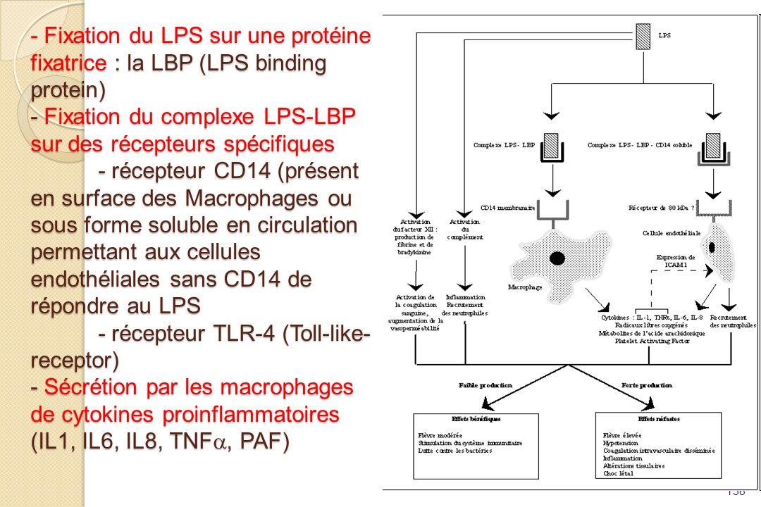 - Fixation du LPS sur une protéine fixatrice : la LBP (LPS binding protein) - Fixation du complexe LPS-LBP sur des récepteurs spécifiques - récepteur CD14 (présent en surface des Macrophages ou sous forme soluble en circulation permettant aux cellules endothéliales sans CD14 de répondre au LPS - récepteur TLR-4 (Toll-like-receptor) - Sécrétion par les macrophages de cytokines proinflammatoires (IL1, IL6, IL8, TNFa, PAF)