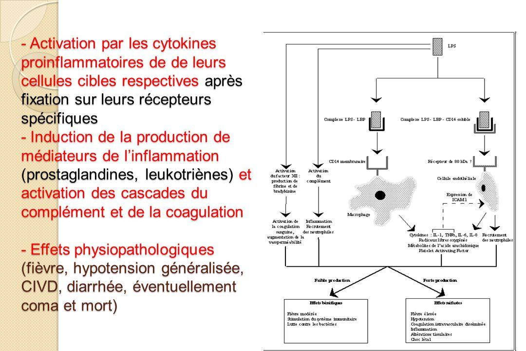 - Activation par les cytokines proinflammatoires de de leurs cellules cibles respectives après fixation sur leurs récepteurs spécifiques - Induction de la production de médiateurs de l'inflammation (prostaglandines, leukotriènes) et activation des cascades du complément et de la coagulation - Effets physiopathologiques (fièvre, hypotension généralisée, CIVD, diarrhée, éventuellement coma et mort)