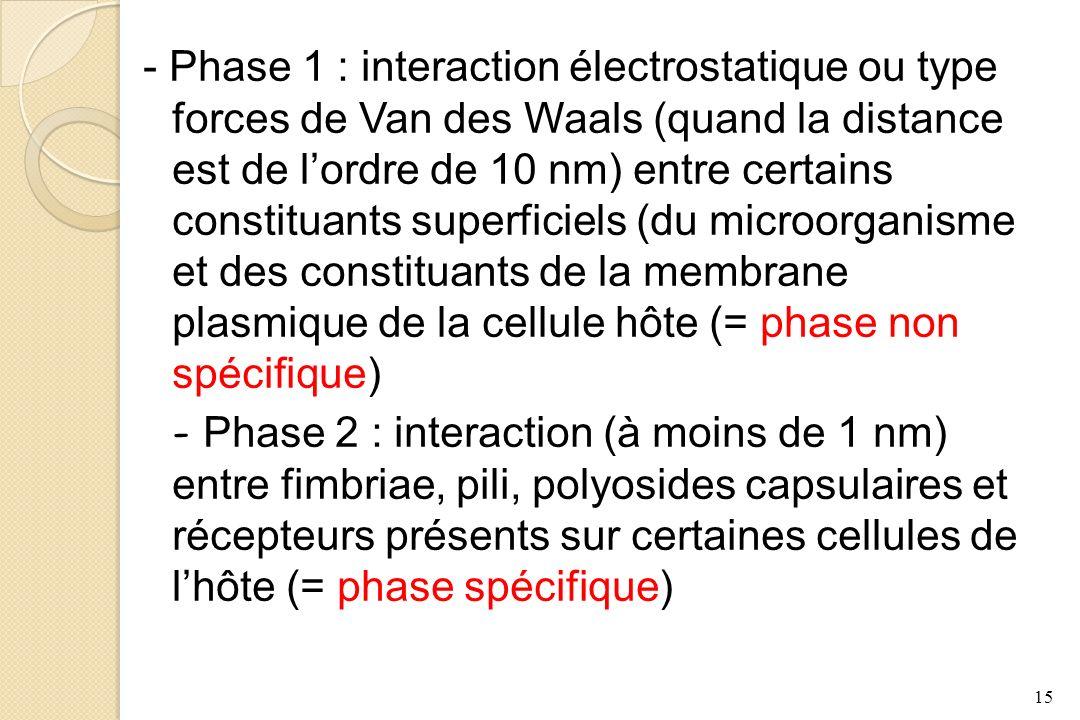 - Phase 1 : interaction électrostatique ou type forces de Van des Waals (quand la distance est de l'ordre de 10 nm) entre certains constituants superficiels (du microorganisme et des constituants de la membrane plasmique de la cellule hôte (= phase non spécifique)