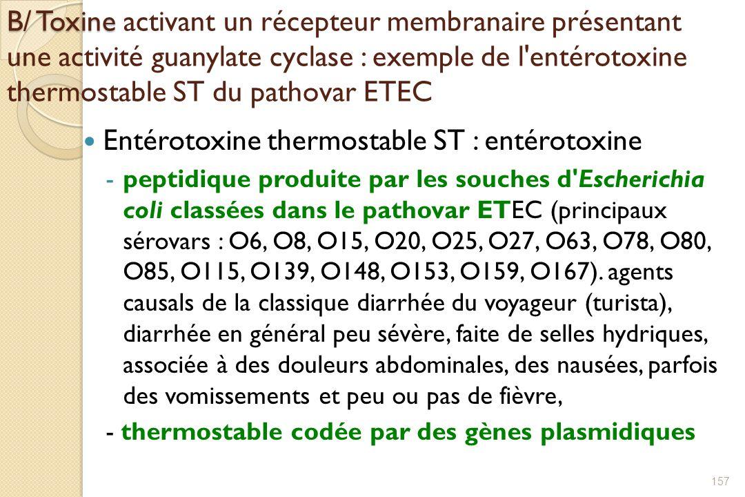 Entérotoxine thermostable ST : entérotoxine