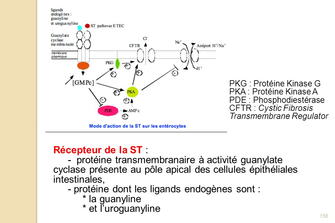 - protéine dont les ligands endogènes sont : * la guanyline