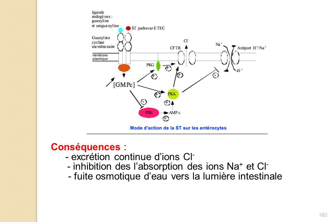 Conséquences :- excrétion continue d'ions Cl- - inhibition des l'absorption des ions Na+ et Cl- - fuite osmotique d'eau vers la lumière intestinale.