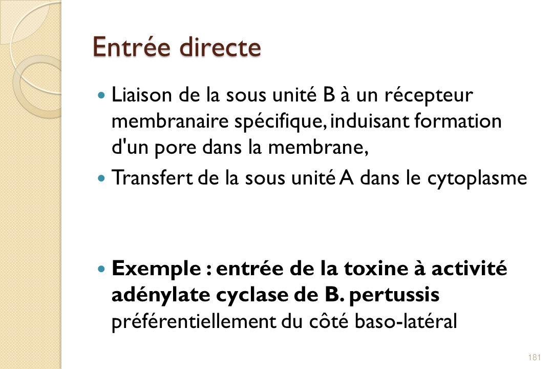 Entrée directe Liaison de la sous unité B à un récepteur membranaire spécifique, induisant formation d un pore dans la membrane,